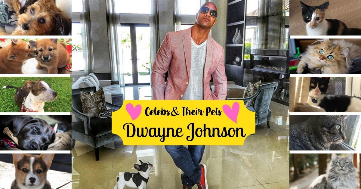 Dwayne The Rock Johnson S French Bulldog Celebrities And