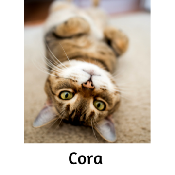 Cora - Paws vs Claws 2019
