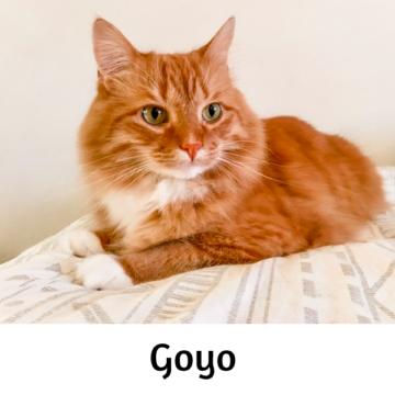 Goyo - Paws vs Claws 2019