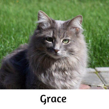 Grace - Paws vs Claws 2019