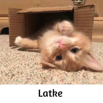 Latke - Paws vs Claws 2019