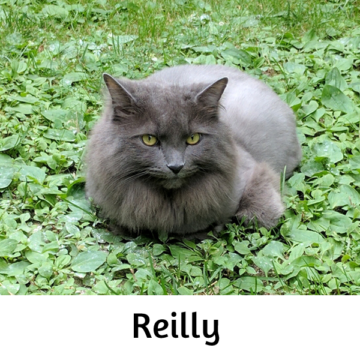Reilly - Paws vs Claws 2019
