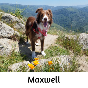 Maxwell - Paws vs Claws 2019