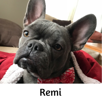 Remi - Paws vs Claws 2019