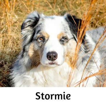 Stormie - Paws vs Claws 2019