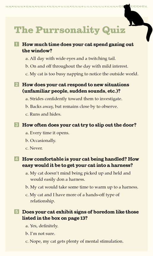 adventurecats-purrsonality-quiz.jpg#asset:30620