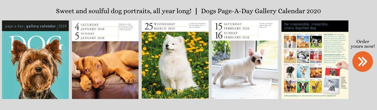 Page-A-Day Dogs Gallery 2020 Calendar