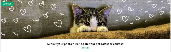 Page-A-Day Pet Contest