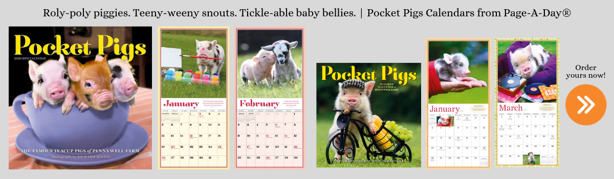 Pocket Pigs 2020 Calendars